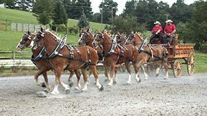 Sunny Hill horses.